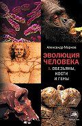 Александр Владимирович Марков - Обезьяны, кости и гены