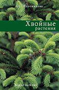 Лилиан Плотникова -Хвойные растения