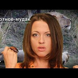 Евгения Тимонова - Лев: животное-мудак