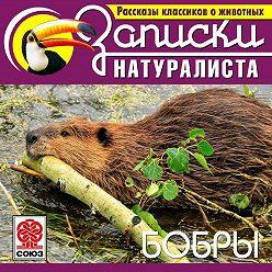 Коллектив авторов - Рассказы классиков о животных. Бобры