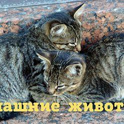 Лана Химочко - Может ли кролик стать другом человека?