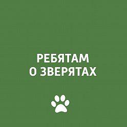 Творческий коллектив программы «Пора домой» - Ребятам о зверятах: экзотические животные