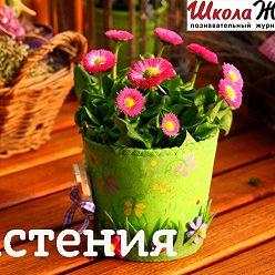 Алексей Норкин - Что мы знаем о растениях - знаках цветочного гороскопа? Горечавка желтая.