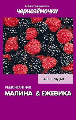 А. Продан - Ремонтантная малина и ежевика