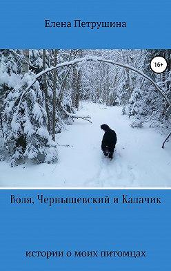 Елена Петрушина - Воля, Чернышевский и Калачик