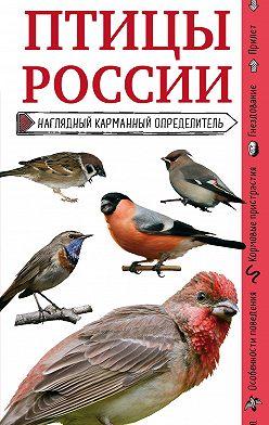 Ксения Митителло - Птицы России. Наглядный карманный определитель