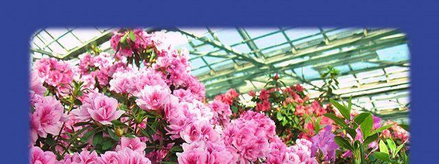 Выращиваем цветы на продажу. Воздушно-газовый режим теплиц. Системы углекислотной подкормки
