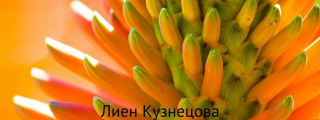 Цветочные истории. Алоэ и другие