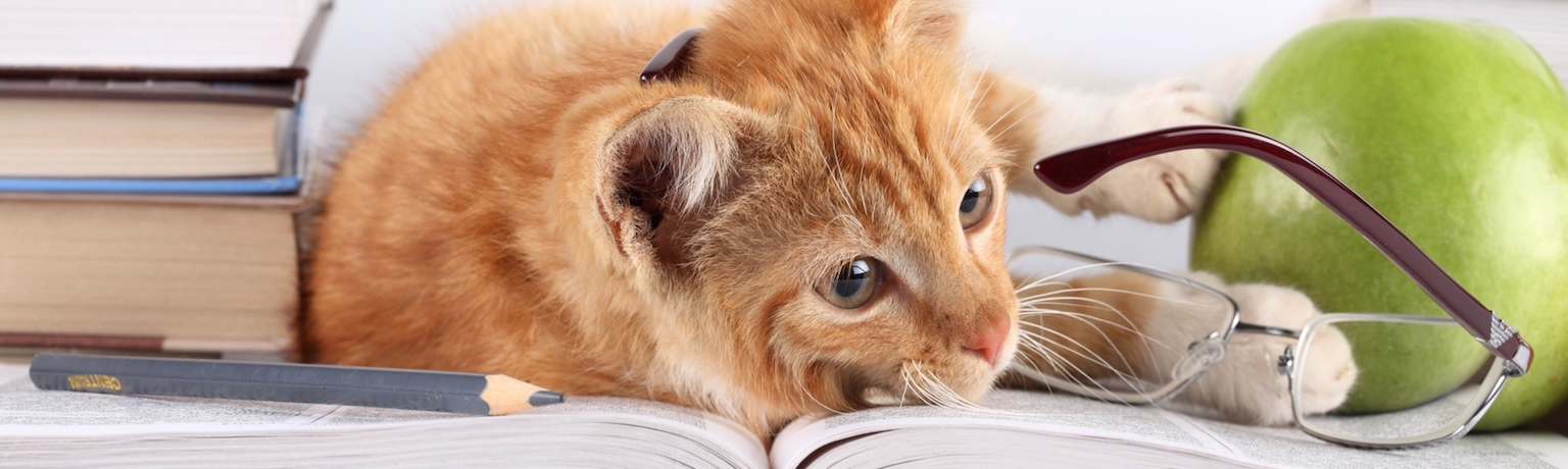 Рассказы для чтения между праздниками