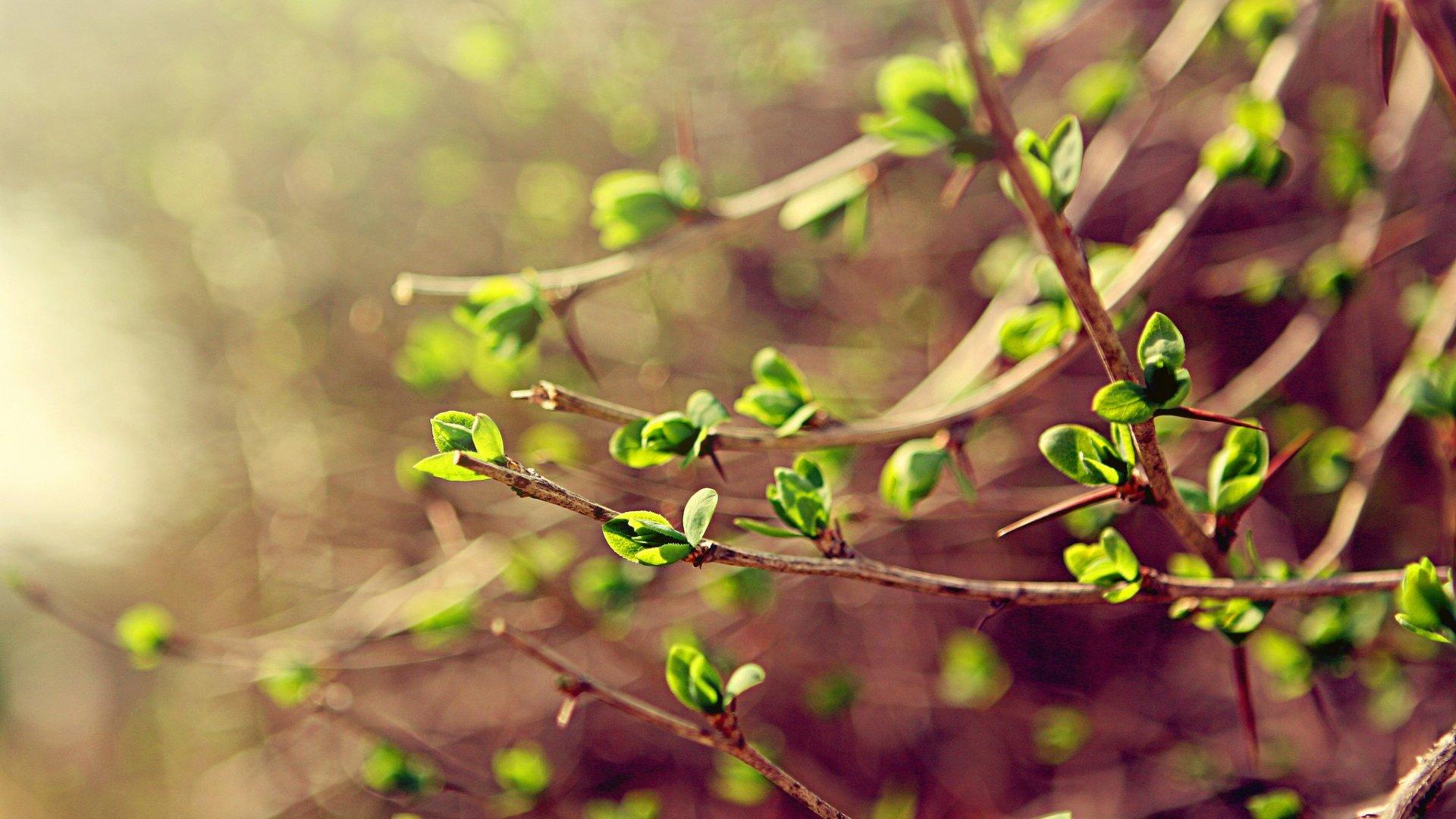 Весна в душе