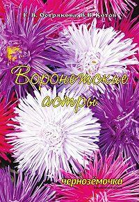 В. Котов -Воронежские астры