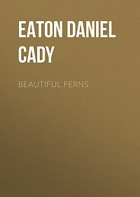 Daniel Eaton -Beautiful Ferns