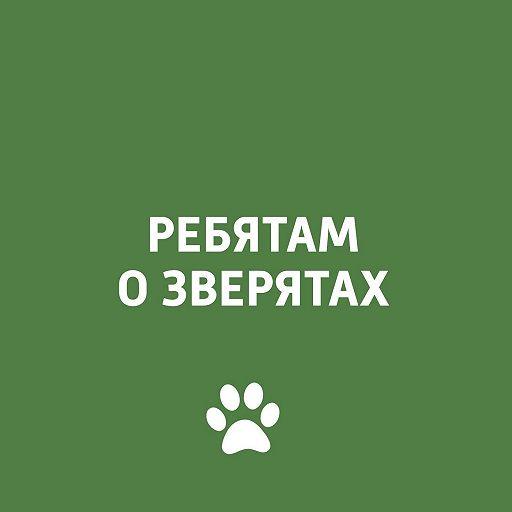 Ребятам о зверятах: экзотические животные